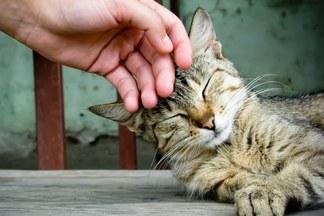 11 приемов для быстрого избавления от стресса