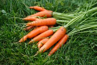 Врачи объяснили, в чем заключается польза моркови для глаз