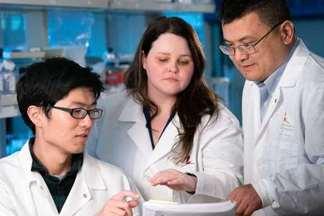 Работа с иммунитетом: ученые исследуют действенный метод борьбы с раком