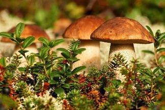 Как избежать отравления в грибной сезон