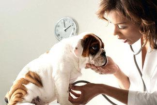 Ветеринар: 10 важных вещей, окоторых вы не думаете, заводя питомца