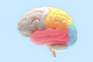 Человек использует лишь 10% своего мозга? 10 мифов оздоровье, в которые мы досих пор верим