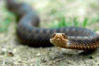 Что делать при укусе змеи: первая помощь пострадавшему