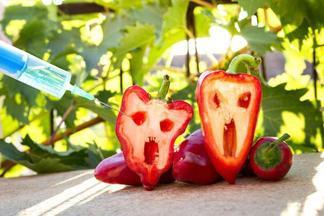 Как ГМО влияют на организм человека: пояснение ученых