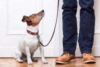 Доказано: владельцы животных живут дольше