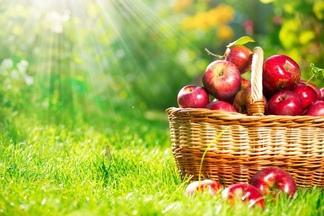 Пять обязательных продуктов для весеннего рациона